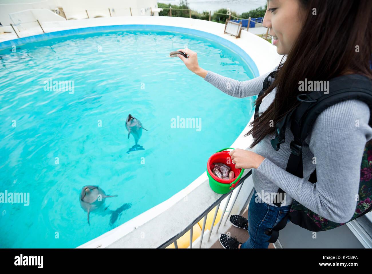 Woman feeding dolphin in aquarium - Stock Image