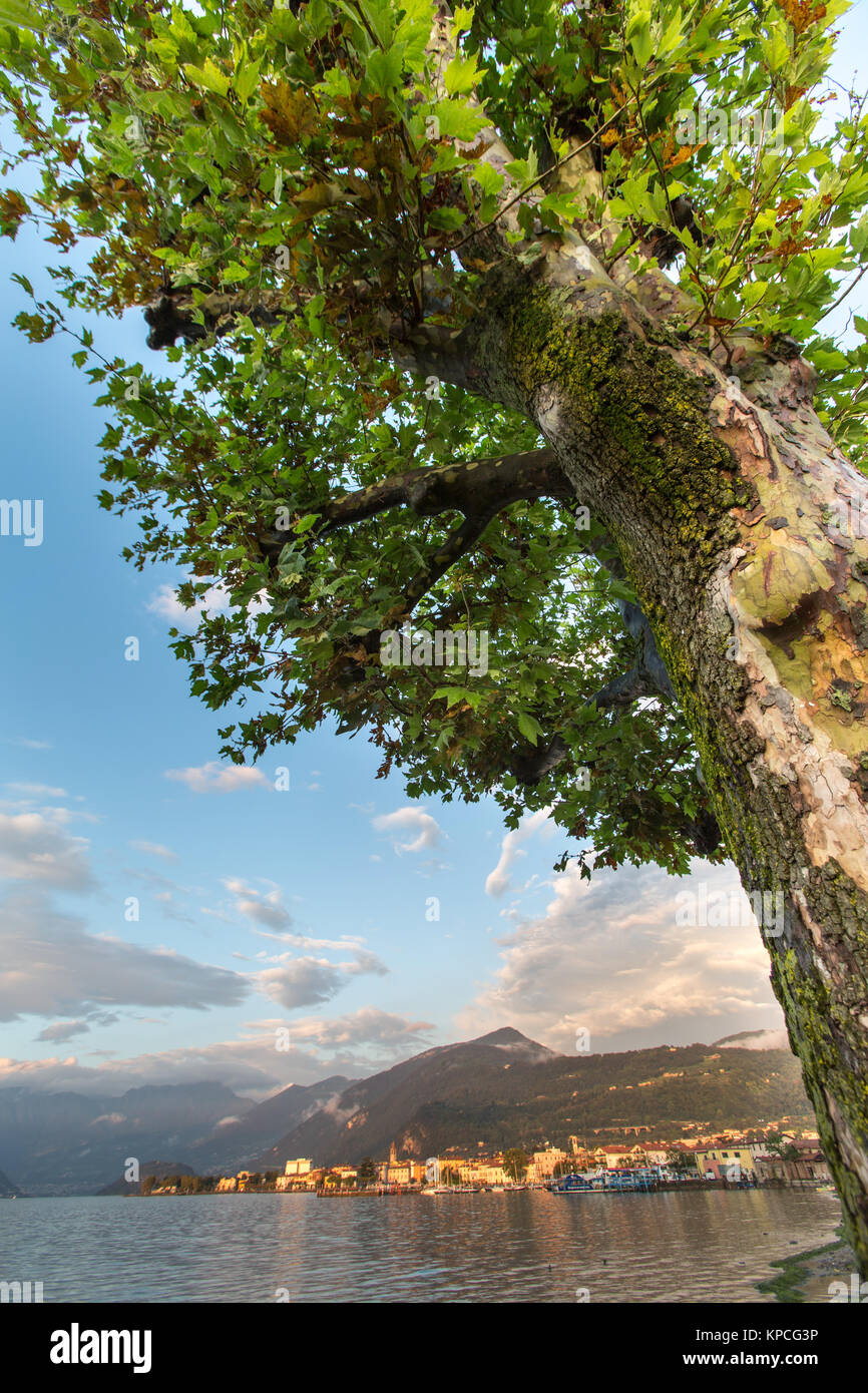 Lake Iseo, Italy. Picturesque dusk view of a tree on the southern shores of Lake Iseo, with Lake Iseo and the town - Stock Image
