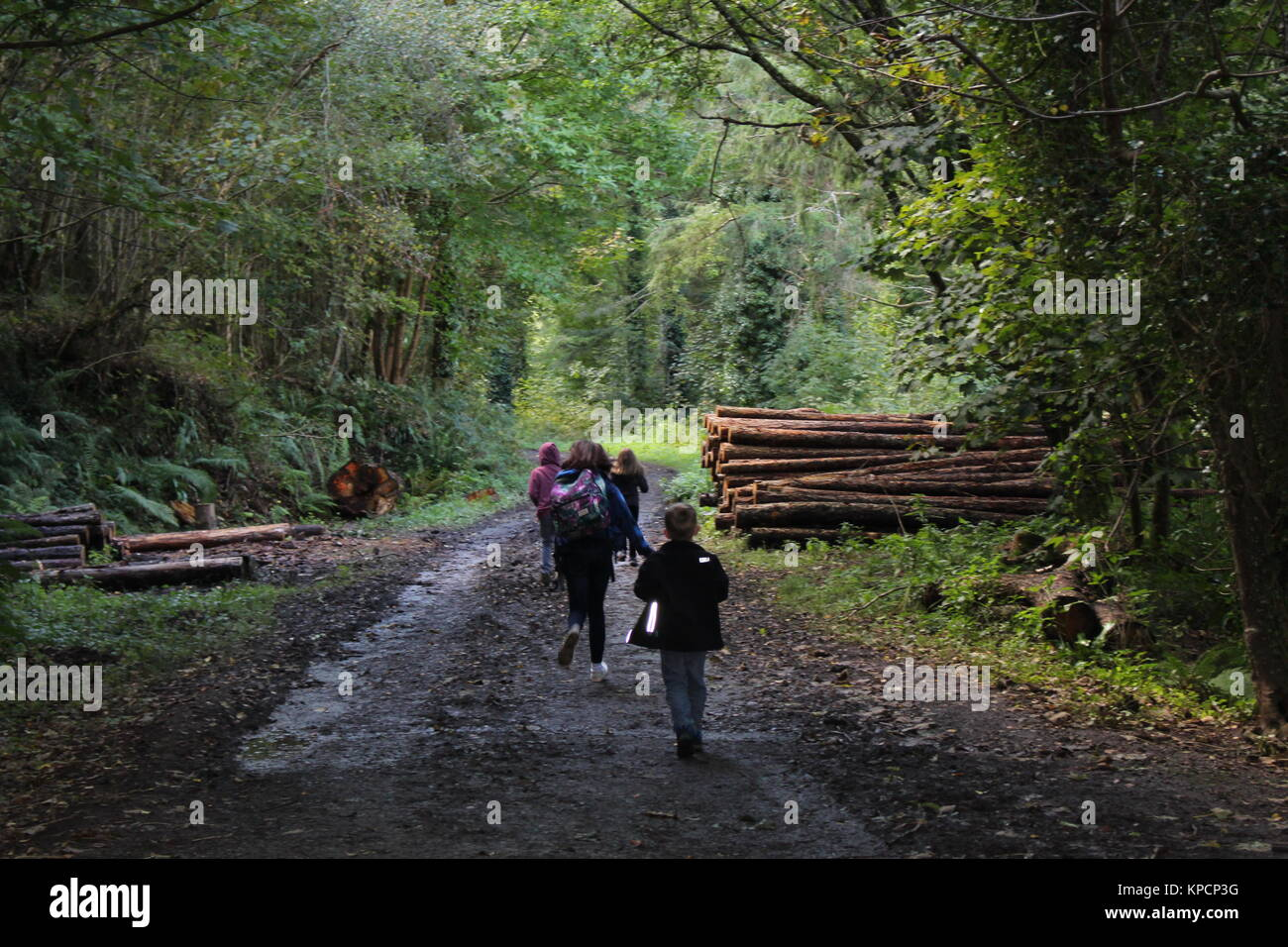 Four kids in the woods - Stock Image
