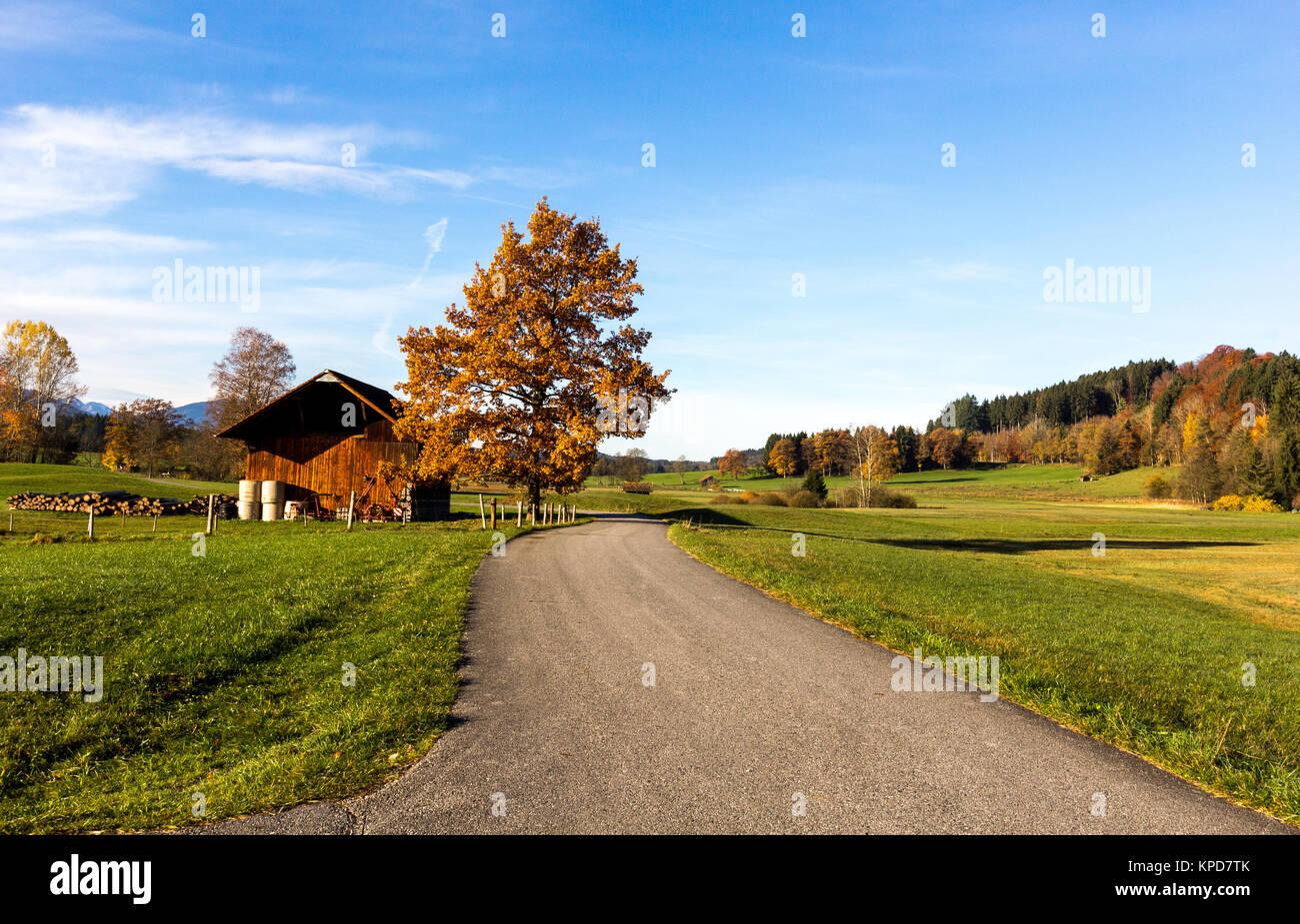 a peaceful walkway in autumnal scenery Stock Photo