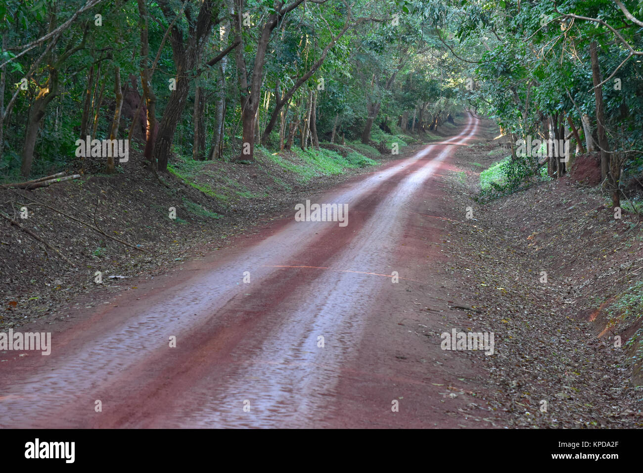 Murchison Falls National Park in Uganda. Forest track through Bugondo Forest. - Stock Image