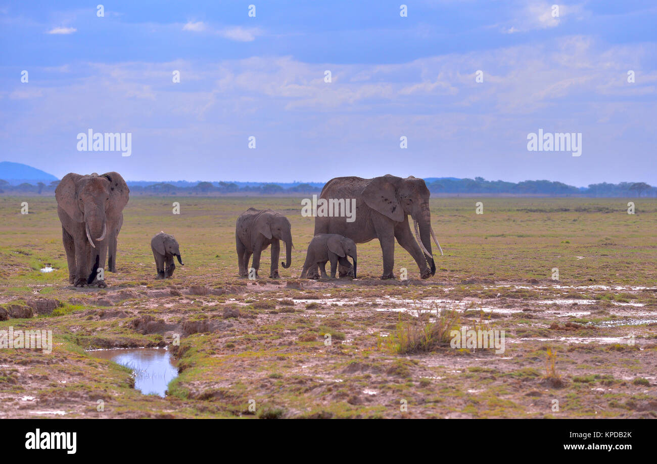 Kenya is a prime tourist destination in East Africa. Famous for wildlife and natural beauty. - Stock Image
