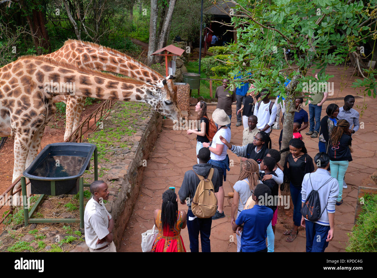 Kenya is a prime tourist destination in East Africa. Famous for wildlife and natural beauty. Giraffe Manor, Nairobi, - Stock Image