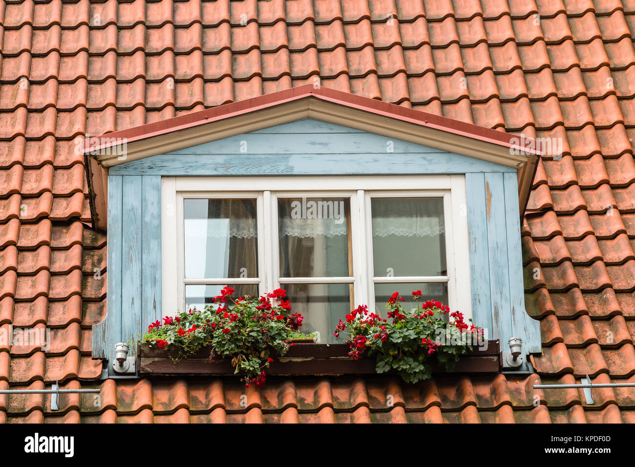 Blue painted window in the roof of a traditional Latvian house in Riga Latvia.  The window box has red flowers - Stock Image