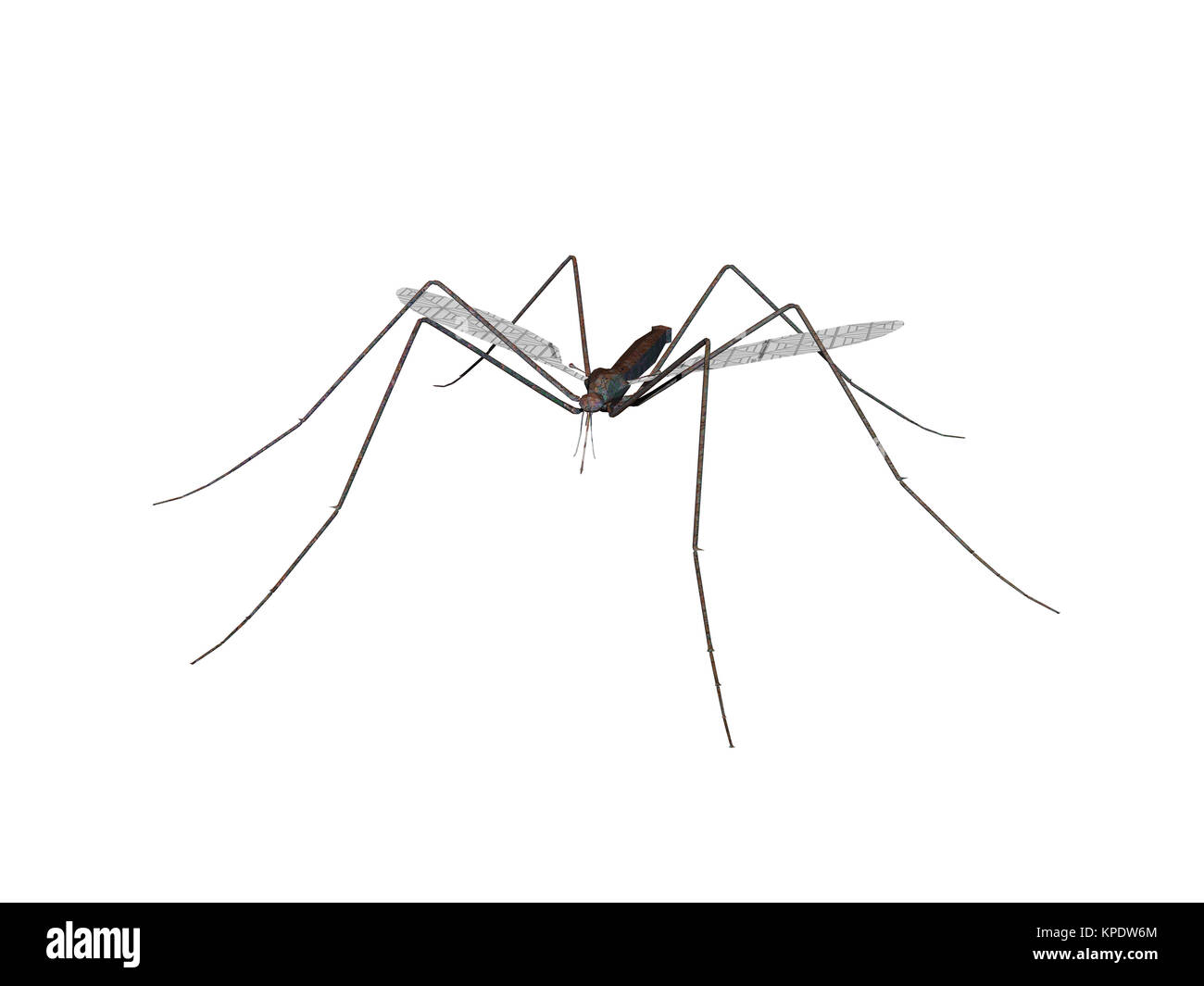 exempted mosquito - Stock Image