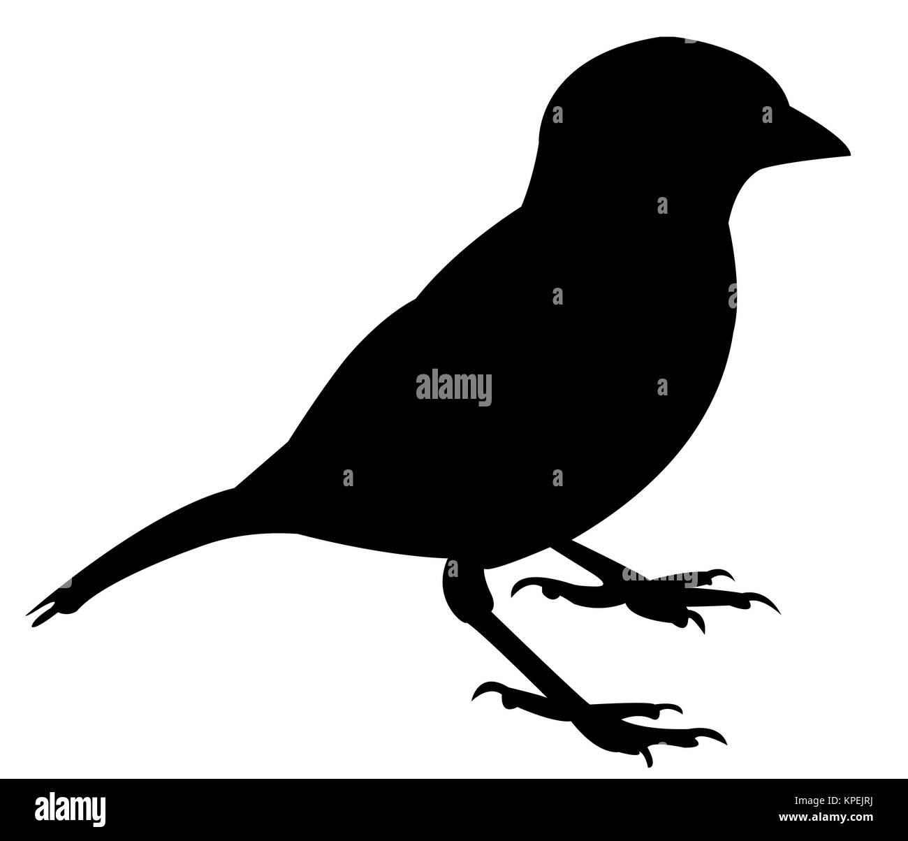 a sparrow silhouette vector - Stock Image