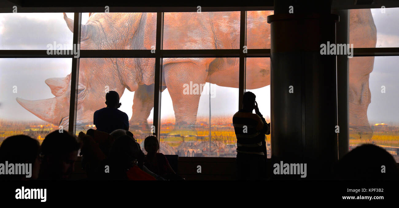 Commuters waiting in Yomo Kenjatta International Airport for aeroplane to arrive. Rhino picture to remind them of - Stock Image