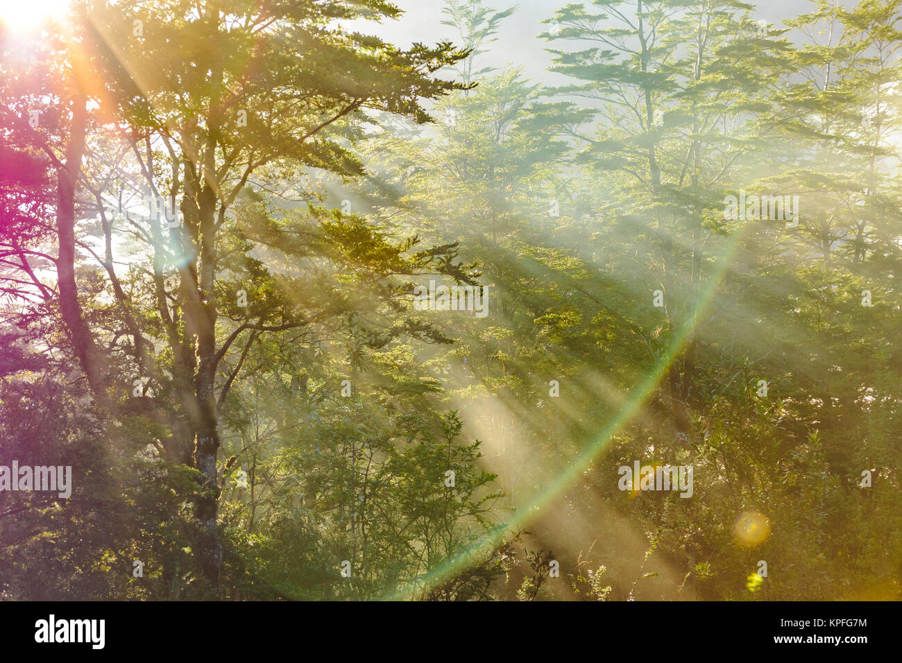 Forest scene at patagonia queulat national park, Aysen, Chile - Stock Image