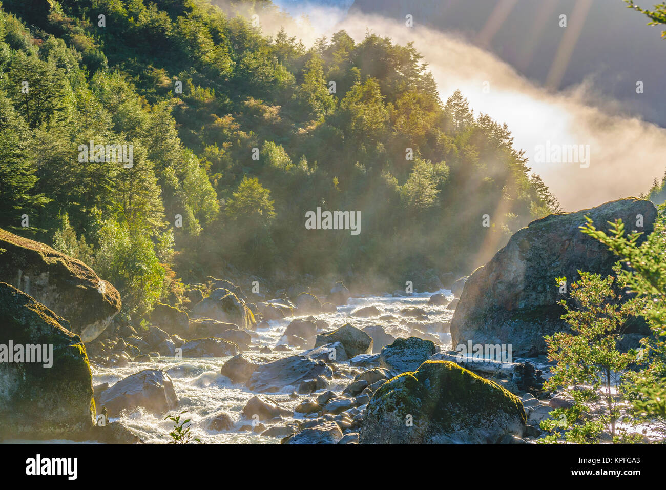 River crossing forest landscape at queulat national park, aysen, chile - Stock Image