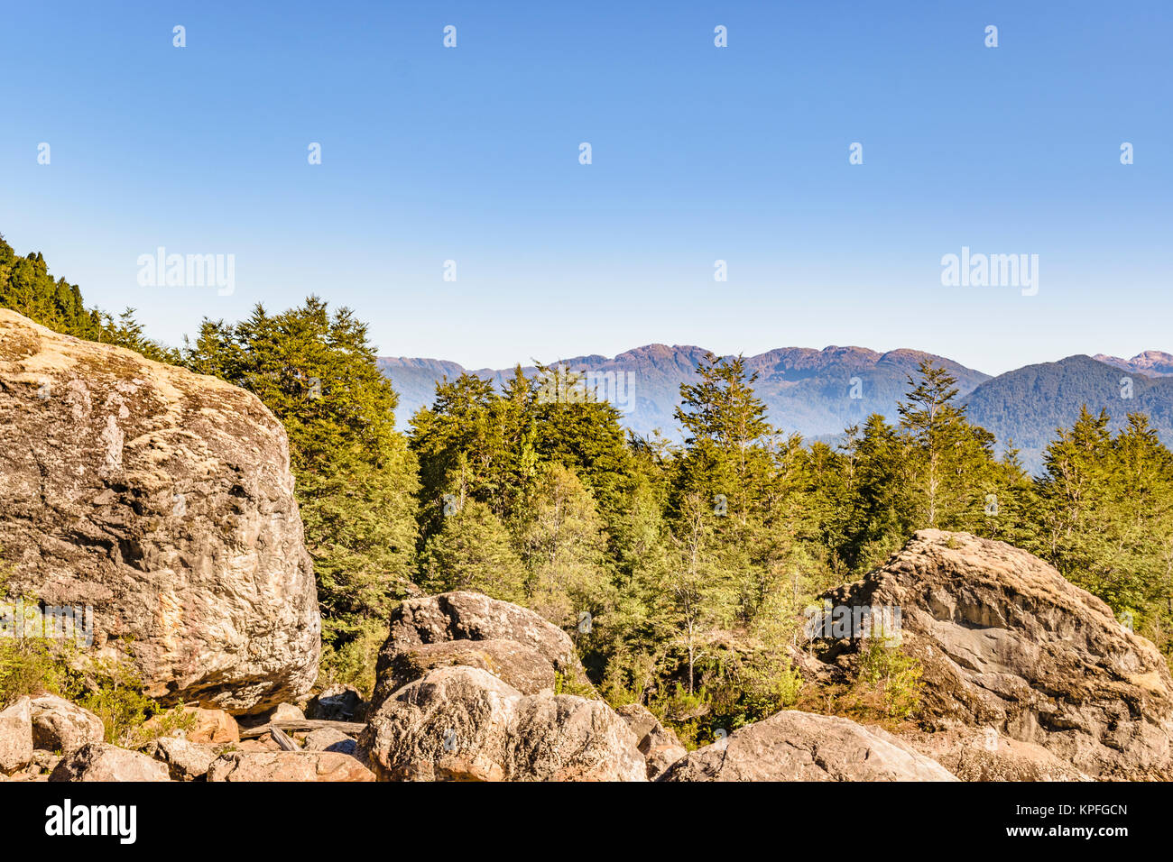 Patagonia landscape forest scene at queulat national park, aysen, chile - Stock Image