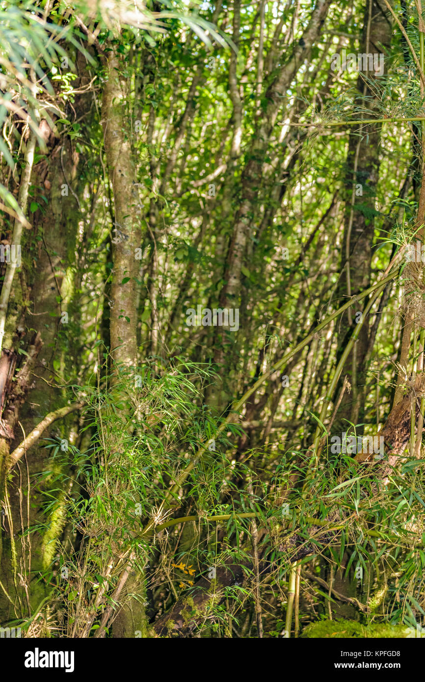 Forest scene at patagonia queulat national park, Aysen, Chile Stock Photo