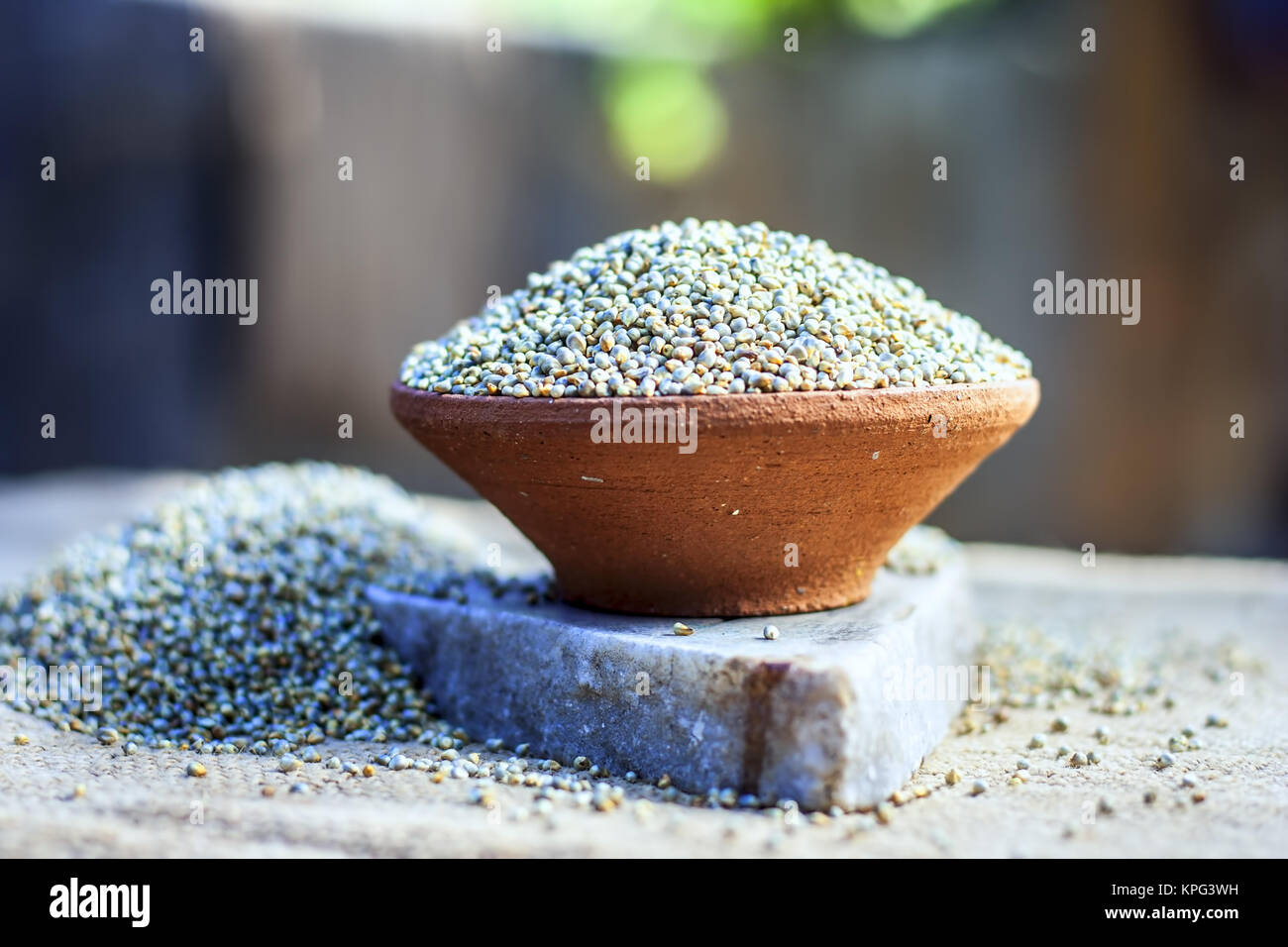 Raw organic Pennisetum glaucum,Bajra pearl millet in a clay bowl. - Stock Image