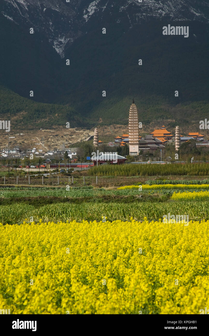 CHINA, Yunnan Province, Dali. Dali Old Town- Three Pagoda Park (built in the 9th century) viewed from mustard fields - Stock Image