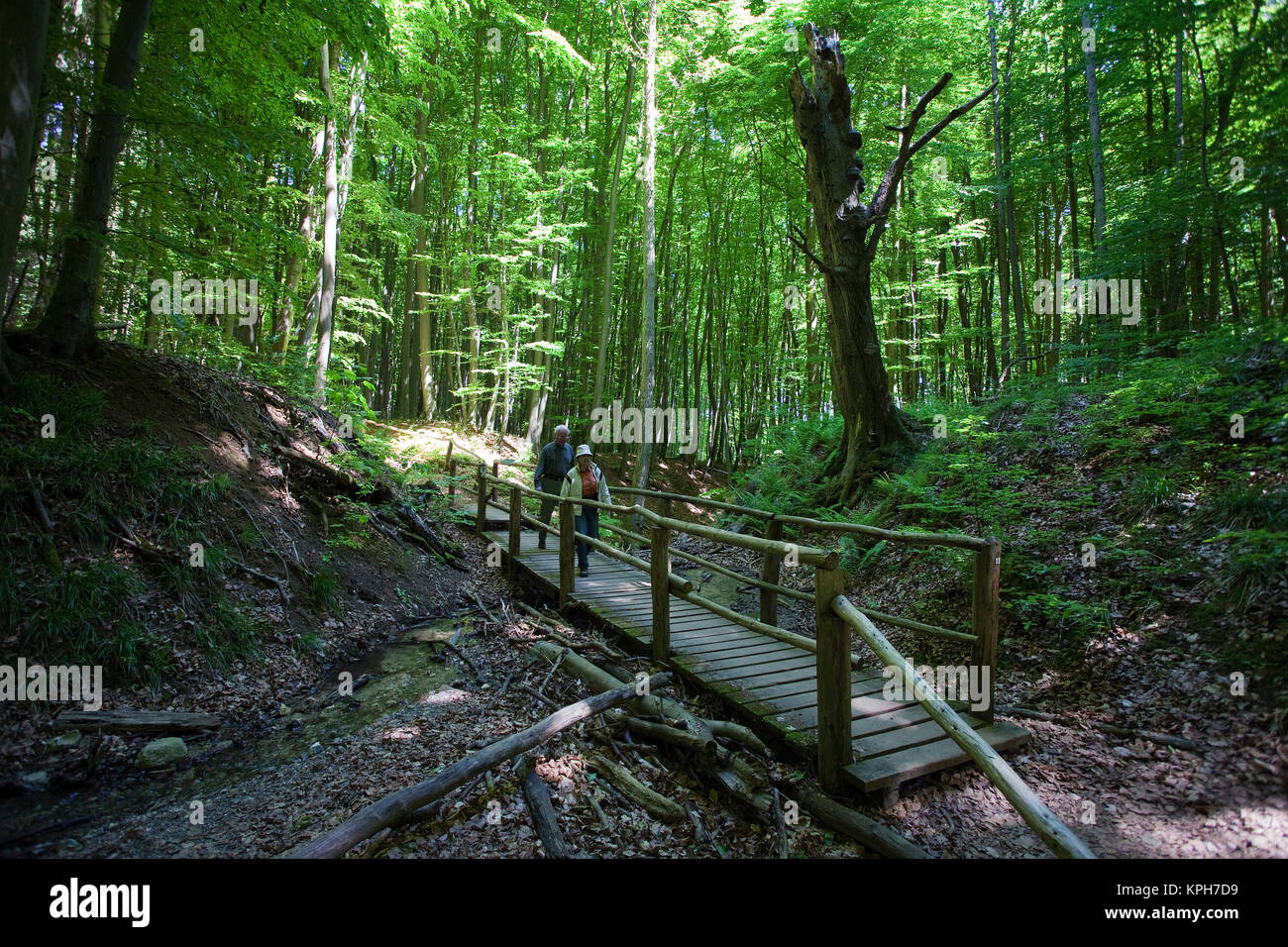 Wooden bridge over a stream, forest at the Jasmund National park, Ruegen island, Mecklenburg-Western Pomerania, - Stock Image