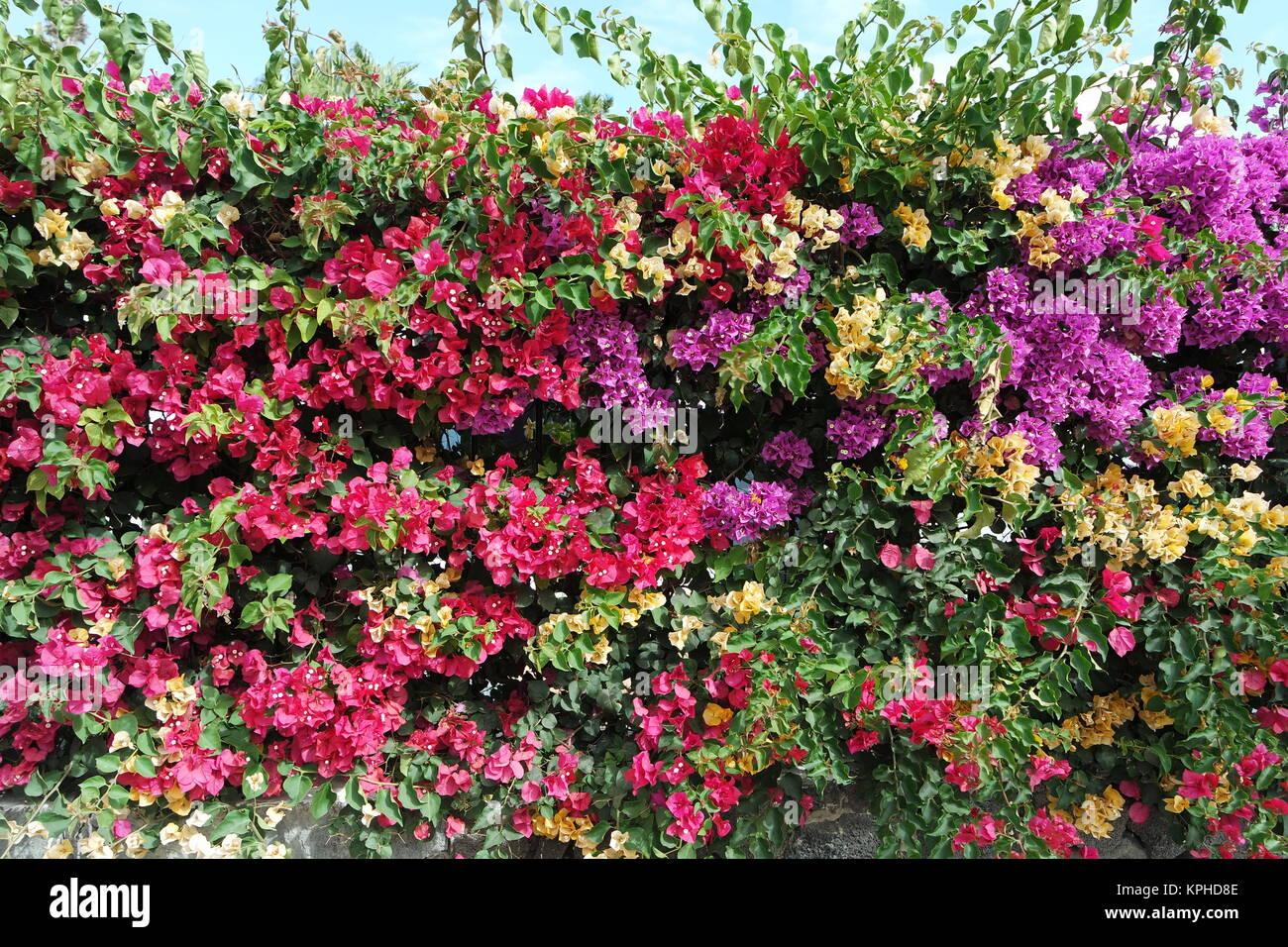 Sichtschutz Hecke Stock Photos Sichtschutz Hecke Stock Images