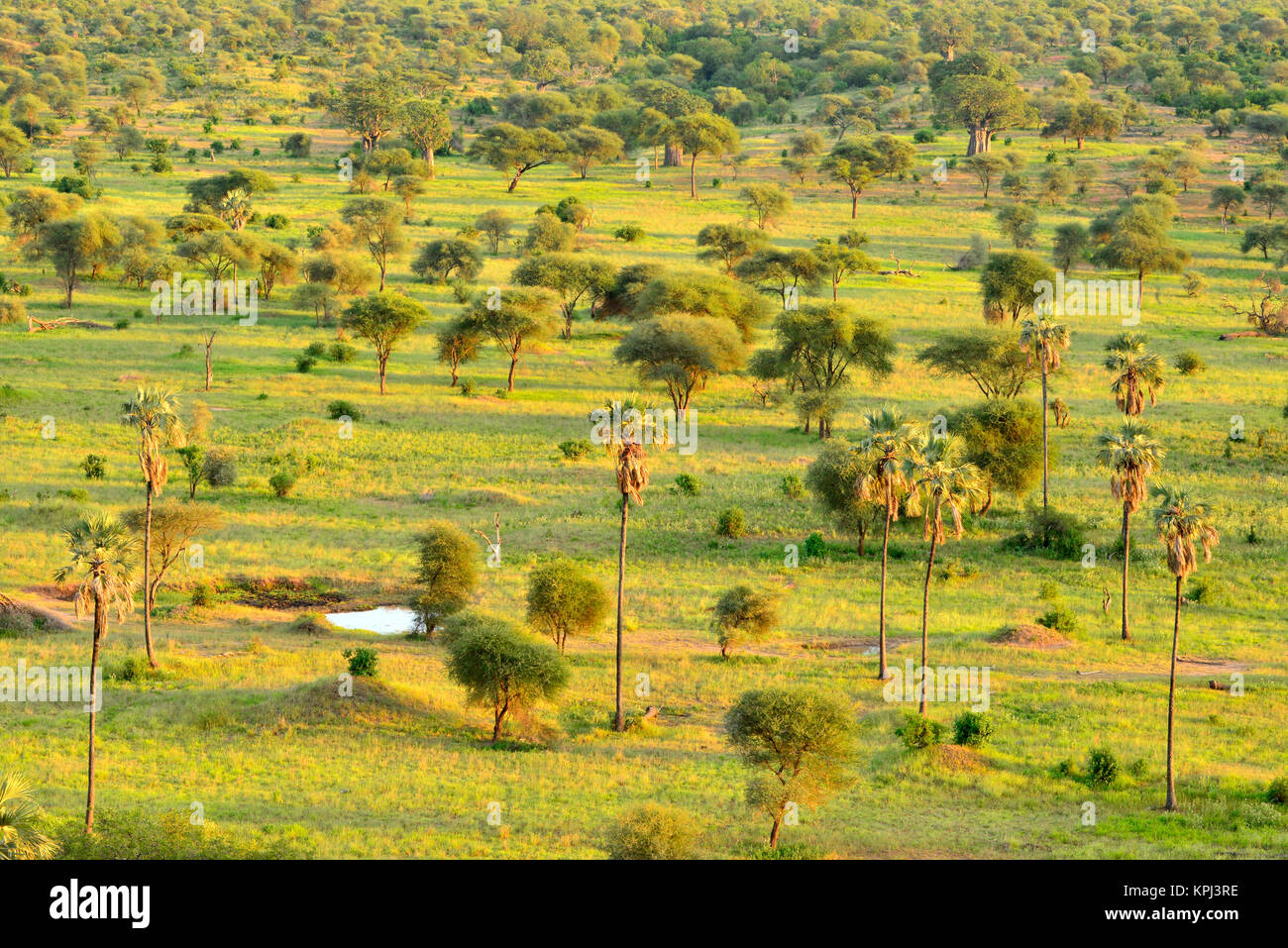 Tarangire national park in Tanzania is an undiscovered jewel with beautiful scenery along the Tarangire river. - Stock Image