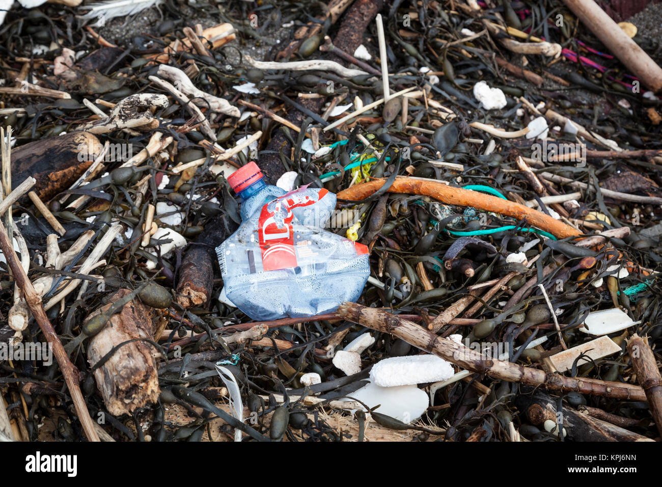 Plastic bottle and polystyrene lying on a beach amidst dry seaweed. - Stock Image