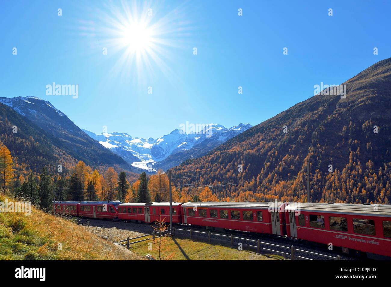 Bernina Express runs through larch forest in autumn, behind Morteratsch Glacier, Canton Graubünden, Switzerland - Stock Image