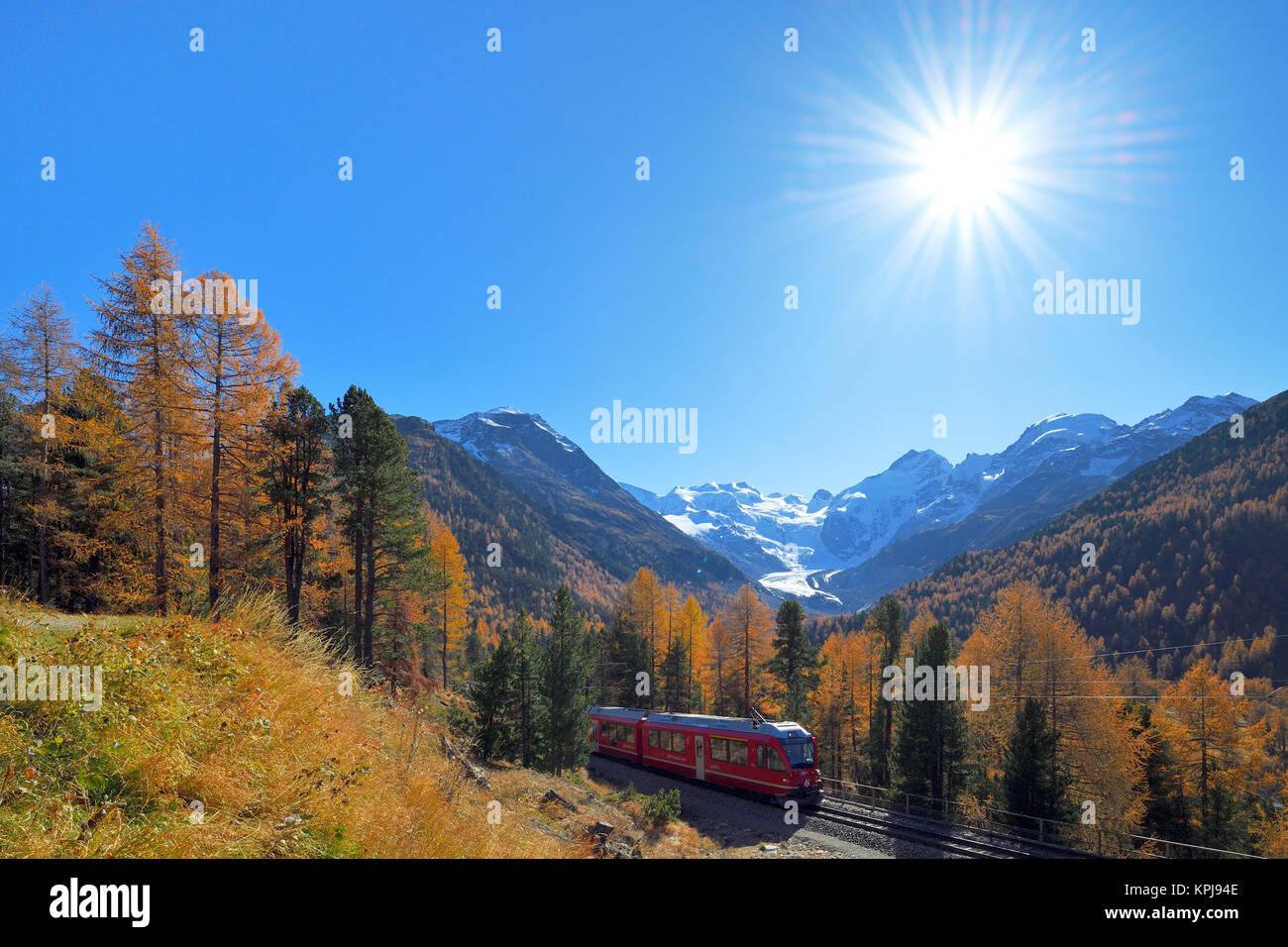Bernina Express runs through larch forest in autumn, behind Morteratsch Glacier, Canton Graubünden, Switzerland - Stock Image
