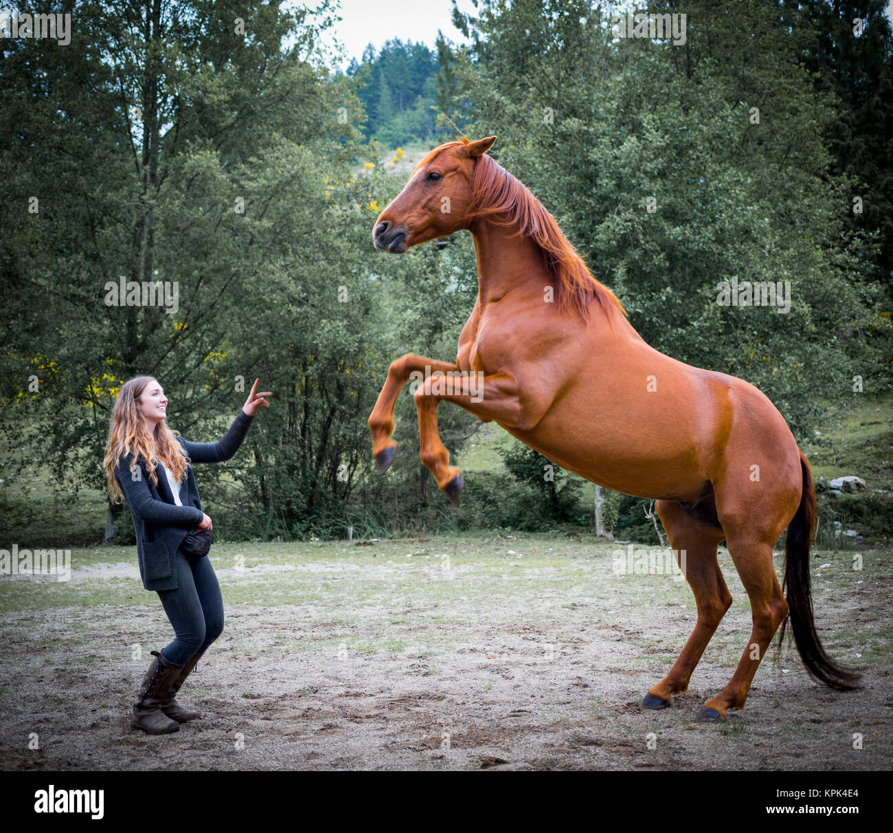 A young woman training a horse in a field and the horse is standing on it's hind legs in front of her - Stock Image