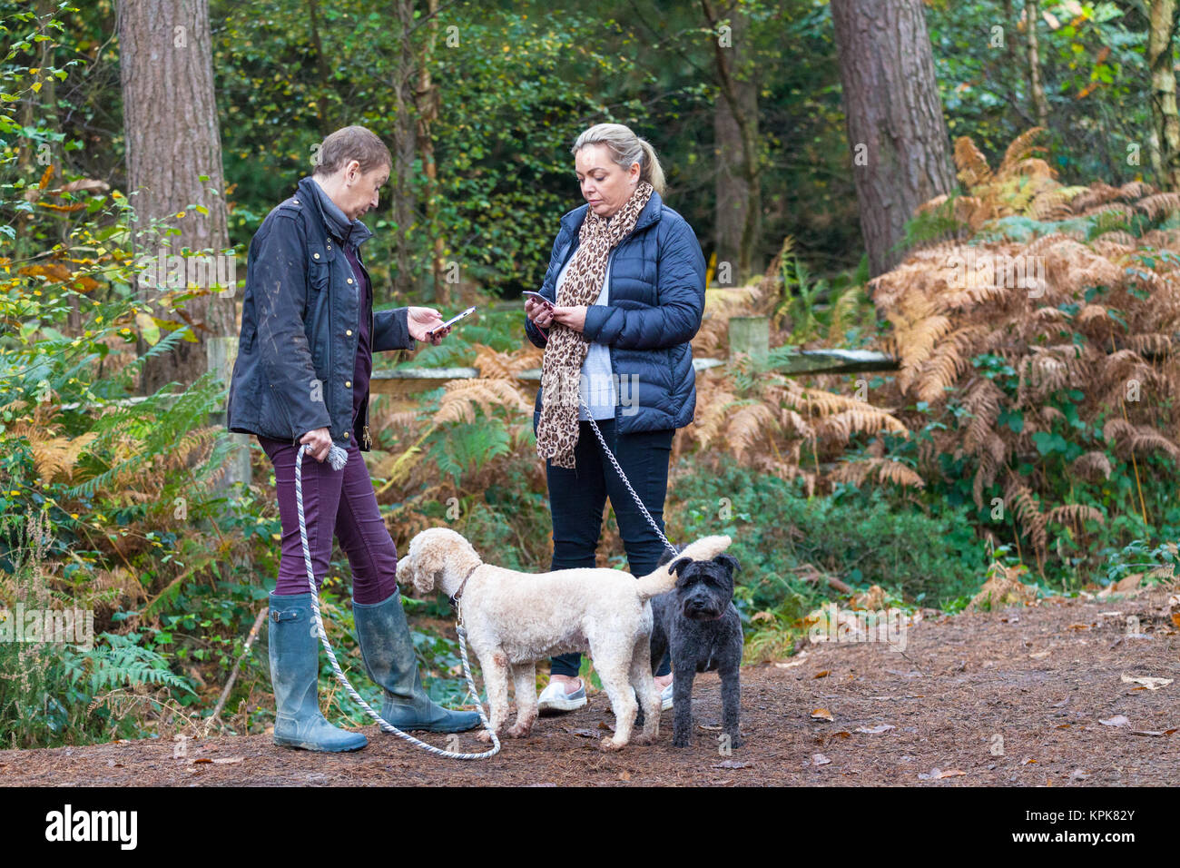 Two women holding mobile phones with dogs attached to leashes at the Bedgebury National Pinetum at Bedgebury, Kent - Stock Image