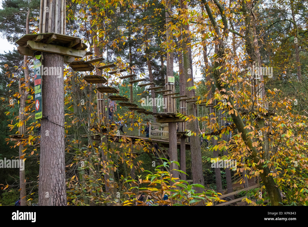 Go ape climbing at the Bedgebury National Pinetum at Bedgebury, Kent - Stock Image