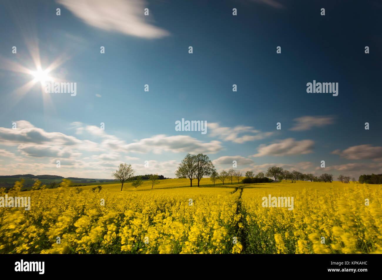 Blühende Rapsfelder mit langen Schatten und schönen Wolken Stock Photo