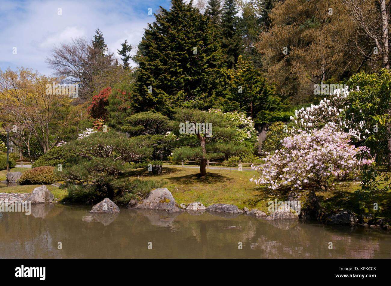 USA, WA, Seattle. Japanese Gardens part of Washington Park Arboretum ...