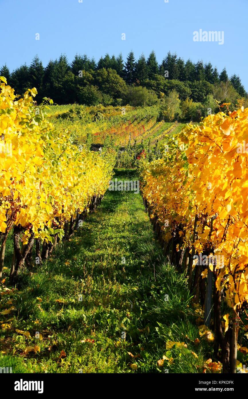 autumnal vineyard in enkirch an der moselrn Stock Photo
