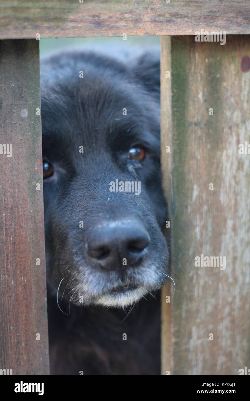 Dog Cage Stock Photos & Dog Cage Stock Images - Alamy