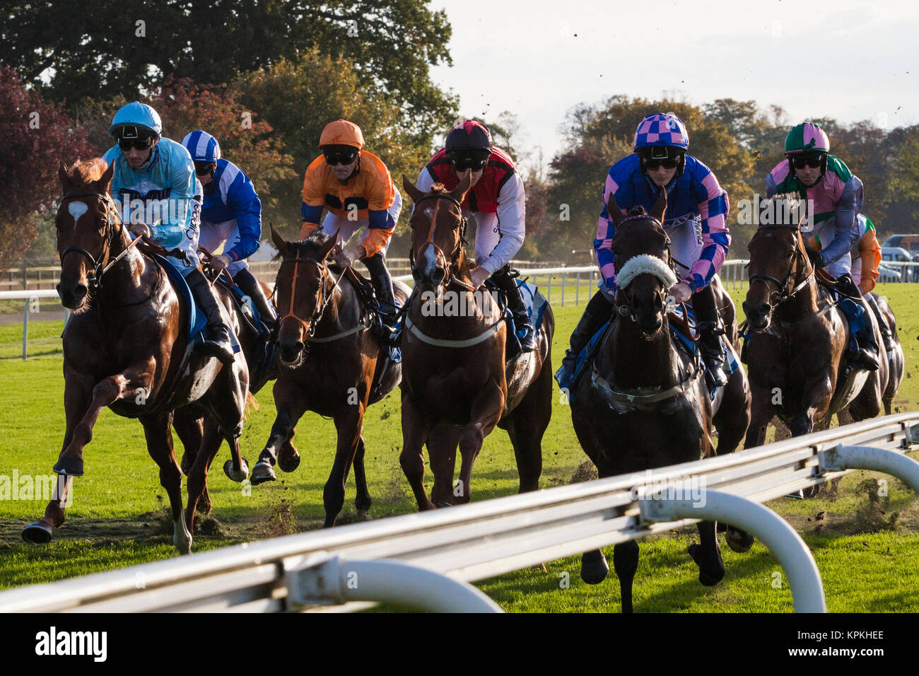 Horses galloping from the start at York Races  at the end of the 2017 season. - Stock Image