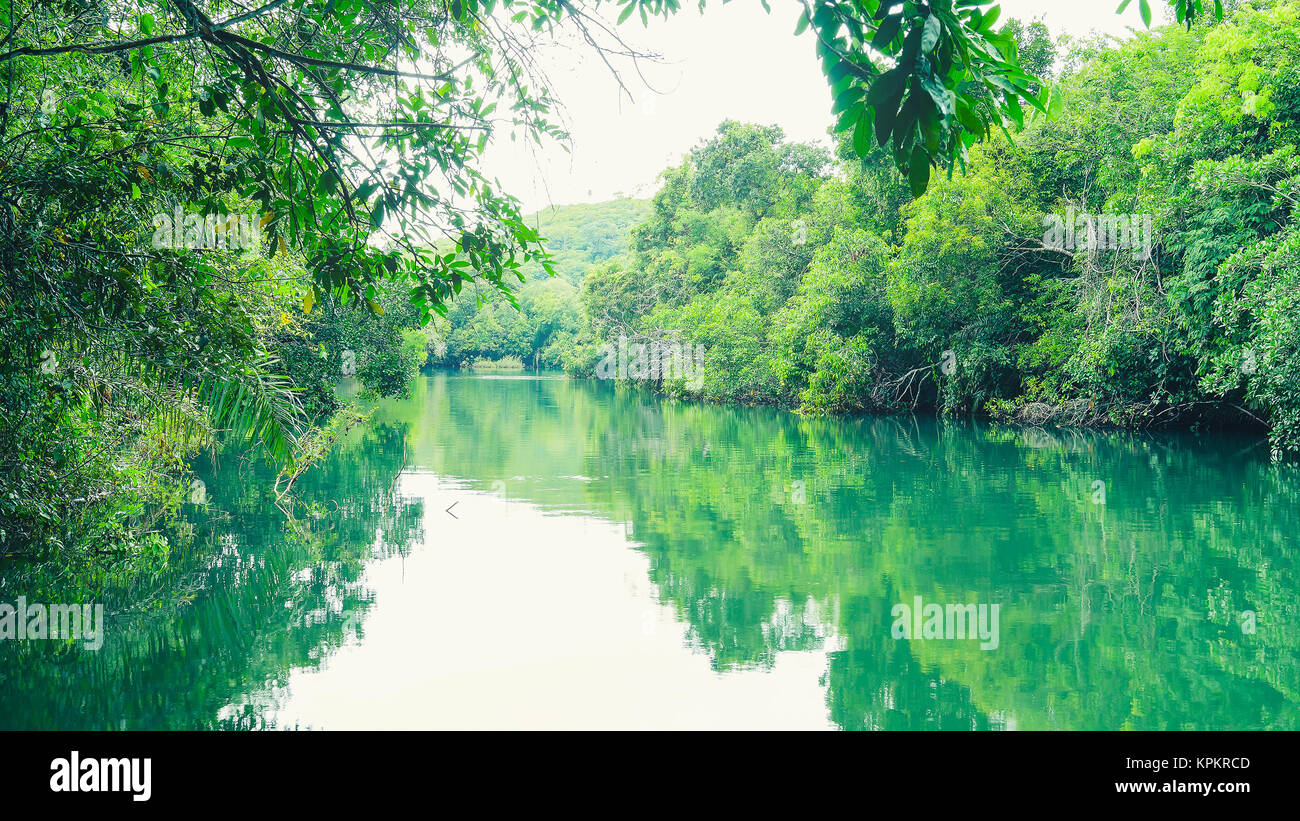Landscape of green water and forest around Formoso river in Bonito MS, Brazil. River visited by tourists that want - Stock Image
