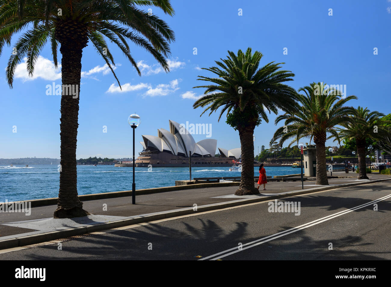 Sydney Opera House through palm trees on Hickson Road, Campbell's Cove, The Rocks, Sydney, New South Wales, - Stock Image