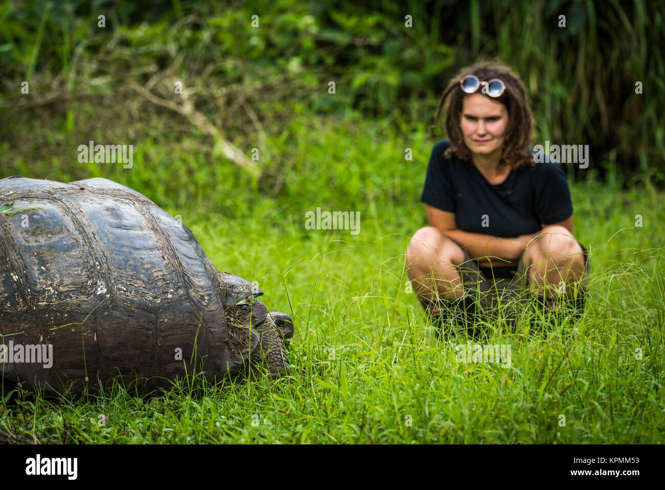Woman staring intensely at Galapagos giant tortoise - Stock Image