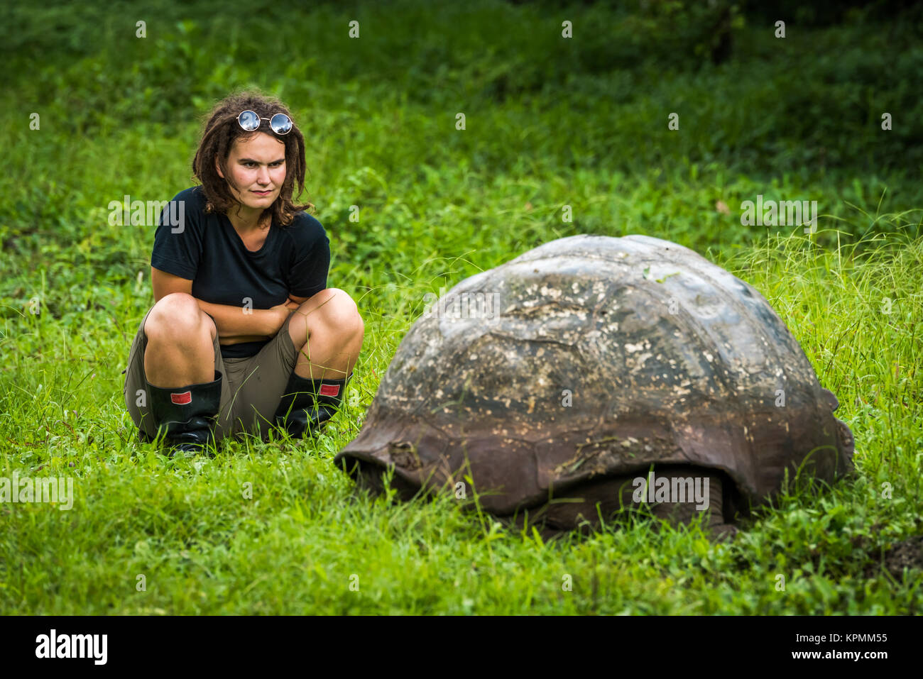 Woman staring intently at Galapagos giant tortoise - Stock Image