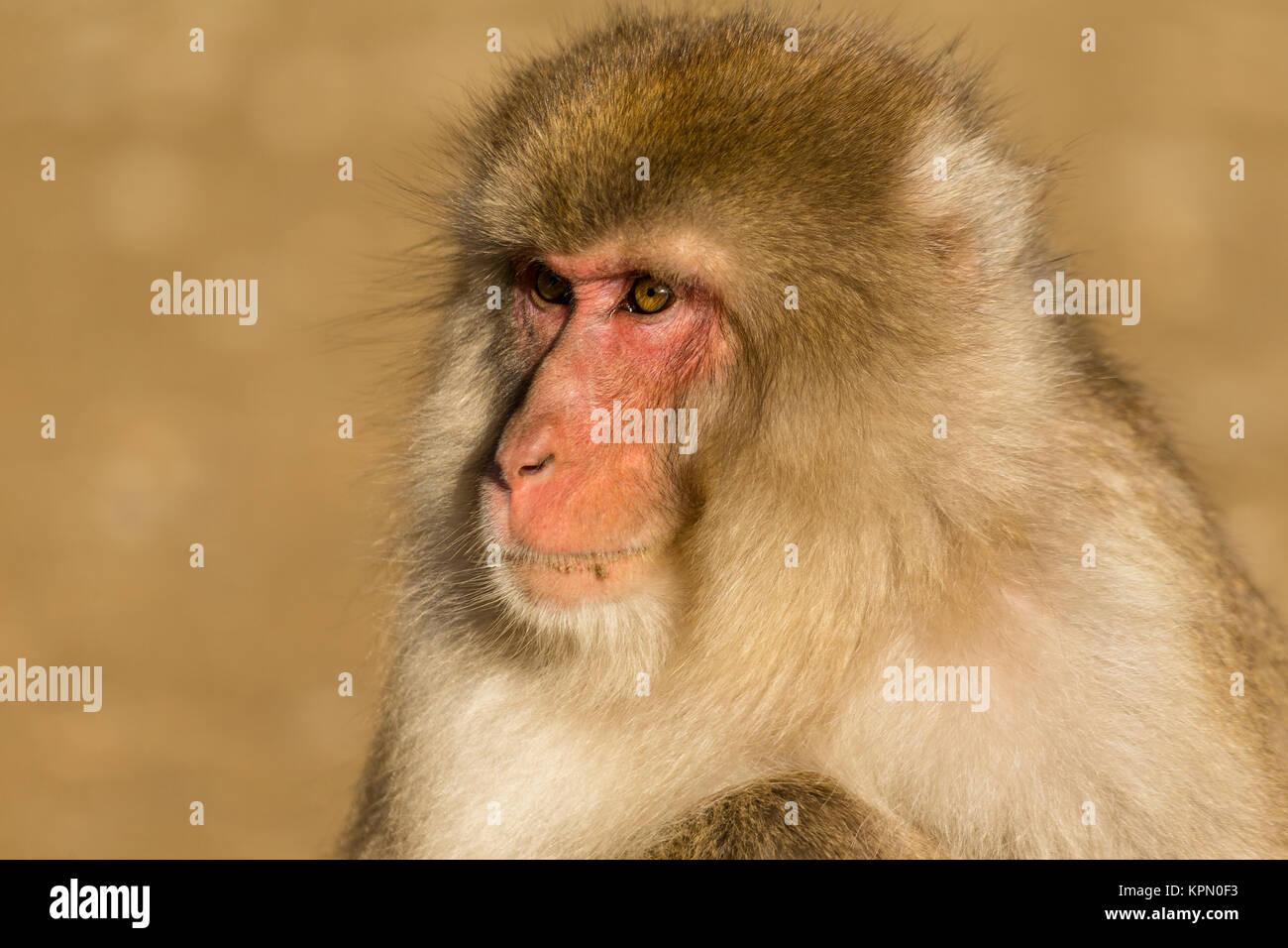 Monkey in wild life Stock Photo