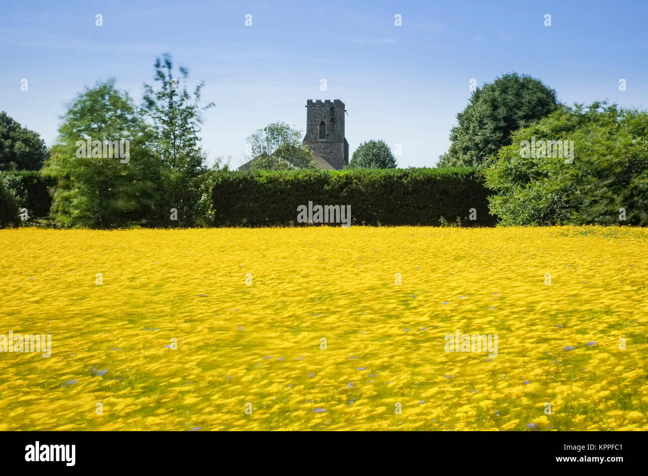 FLOWER MEADOW AT EAST RUSTON OLD VICARAGE GARDENS IN WIND - Stock Image