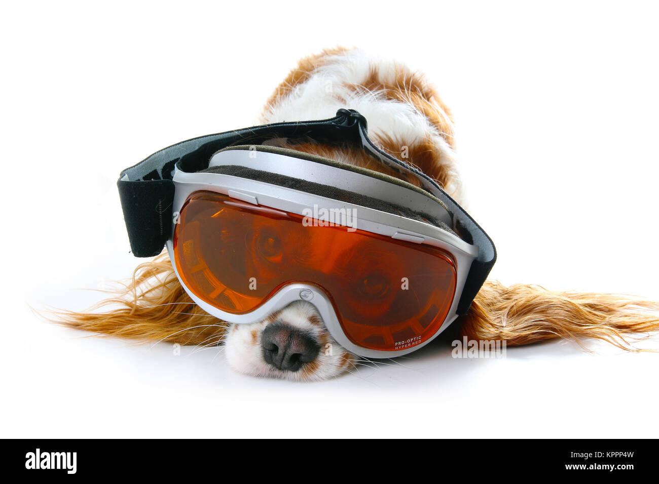 Dog with skiing ski eyewear eye mask sunglasses accessories. Cute illustration. - Stock Image