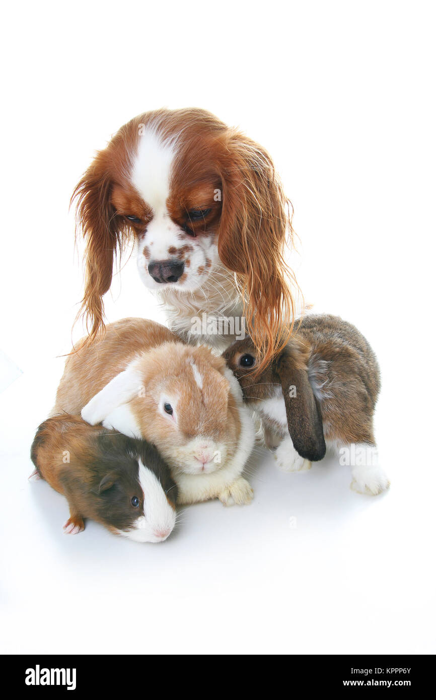 Animal friends. True pet friends. Dog rabbit bunny lop animals together on isolated white studio background. Pets Stock Photo