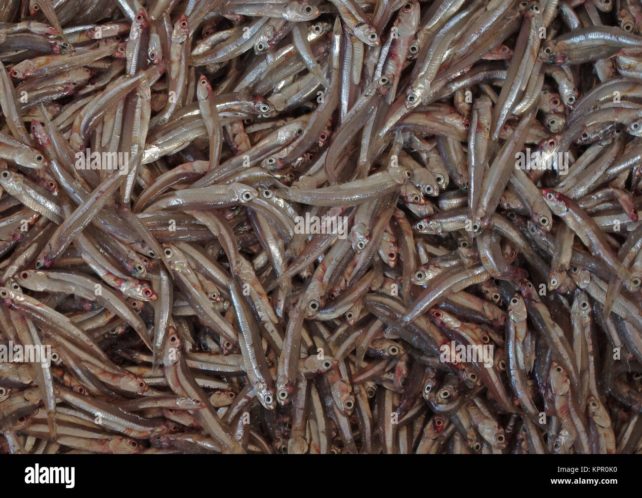 Anchovies at the fish market in Oman - Stock Image