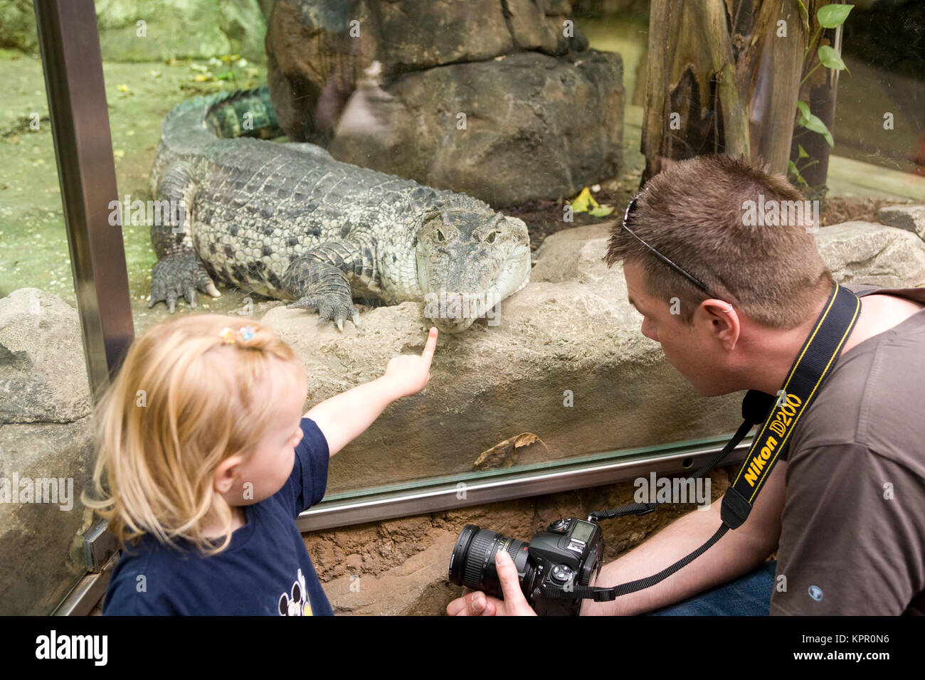 Europe, Germany, Wuppertal, the Zoo, girl and crocodile.  Europa, Deutschland, Wuppertal, Zoo Wuppertal, Maedchen - Stock Image