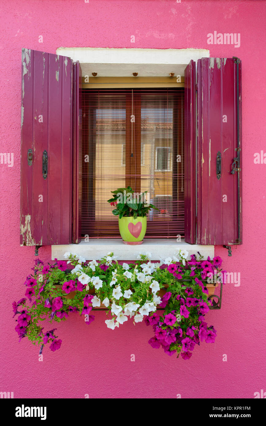 Colour contrasts in typical Burano window and window box floral display - Burano a colourful  Italian island village - Stock Image