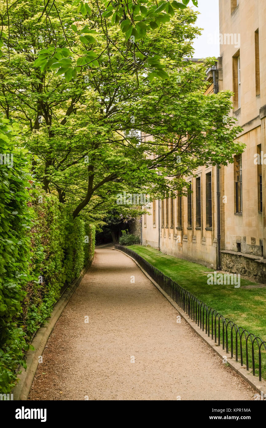 Grove Walk in Oxford linking Merton Street with Dead Mans Walk and Merton Walk.  Corpus Christi College is on the - Stock Image