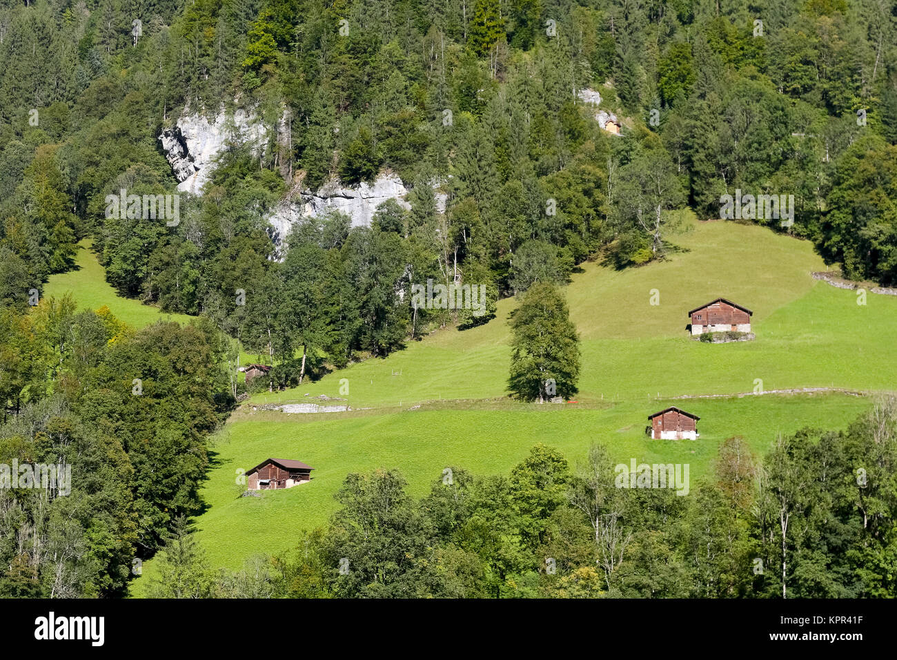 On the meadow, among the forests on a slight slope of the hill, there are huts that can be visible from Lauterbrunnen - Stock Image