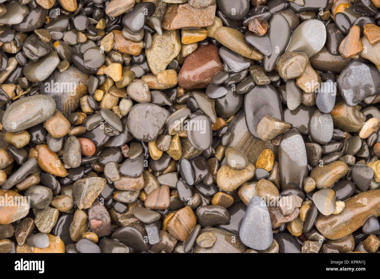 Background texture of wet sea pebbles of medium size - Stock Image