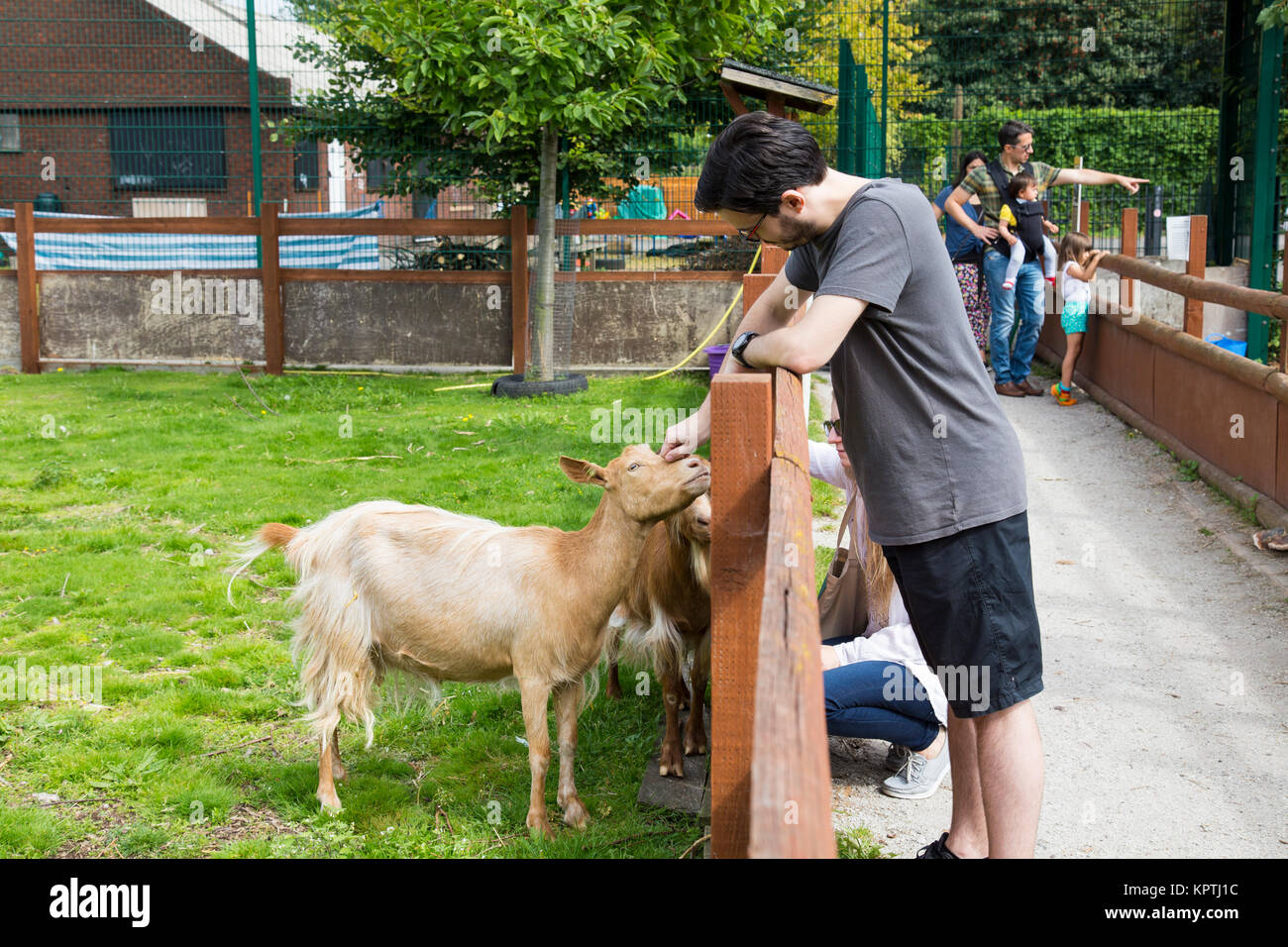 Young man stroking a goat inside an enclosure at Spitalfields City Farm, London, UK - Stock Image