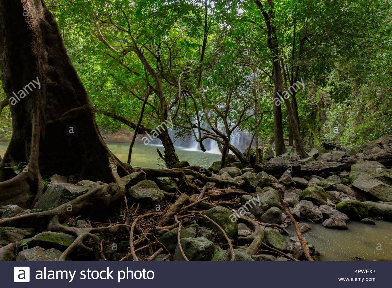 Catarata Llano de Cortés, Llano de Cortés Waterfall and forest - Stock Image