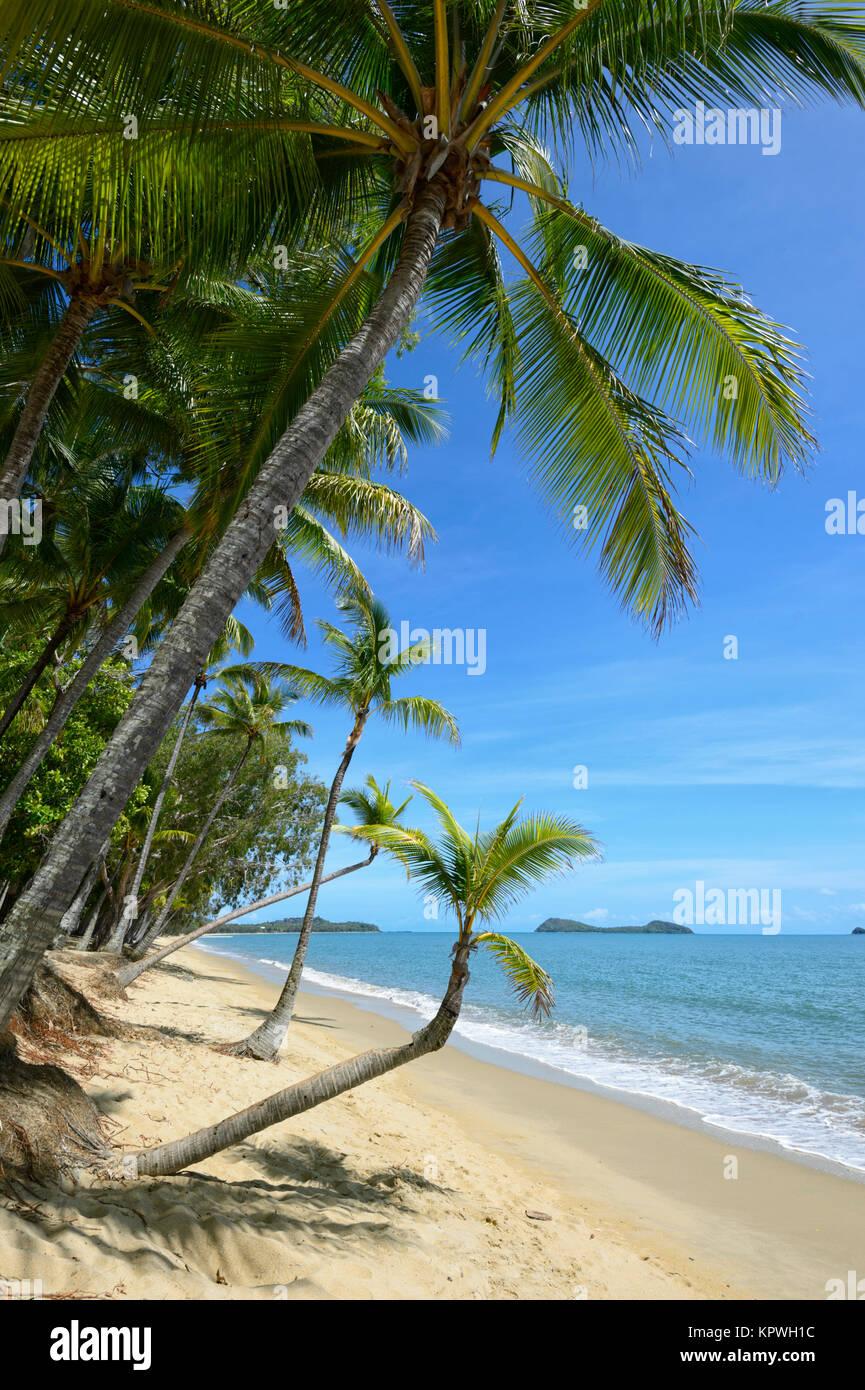 Palm-fringed sandy beach of Clifton Beach, Northern Beaches suburb Cairns, Far North Queensland, FNQ, QLD, Australia Stock Photo