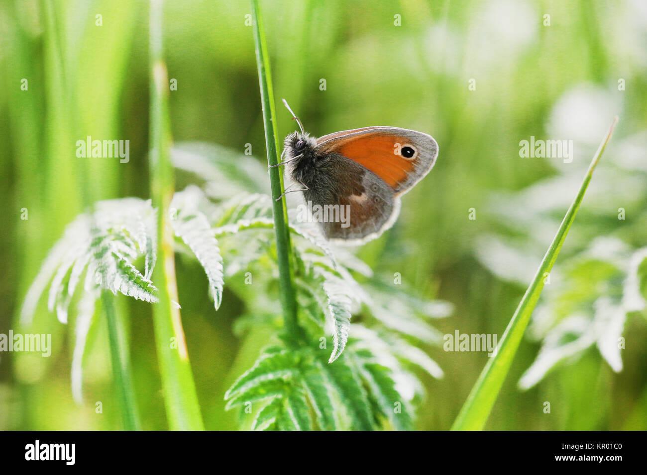 in macro jungle - Stock Image