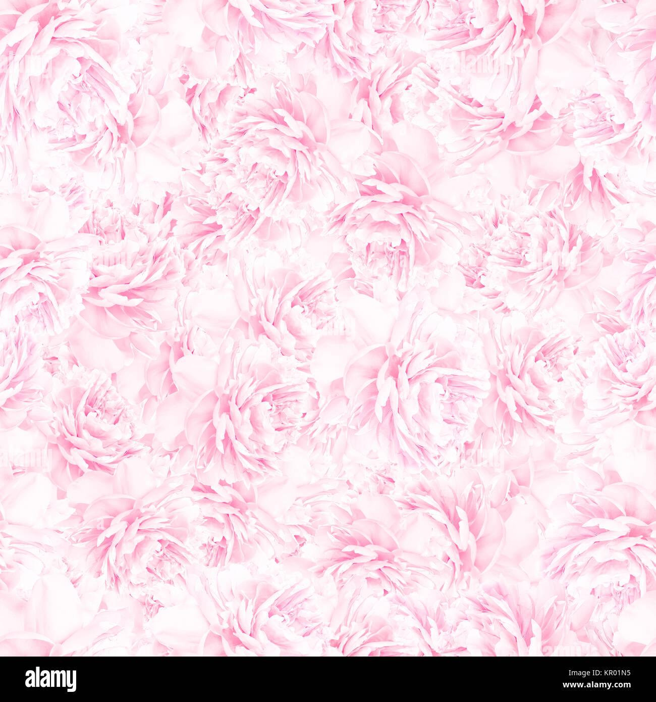 Light Pink Floral Pattern Ibhalo Parkersydnorhistoric Org